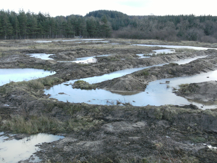 The wetland in April