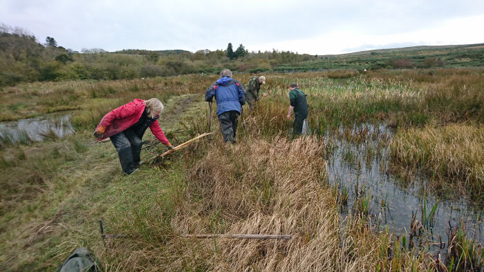 Working on the wetland