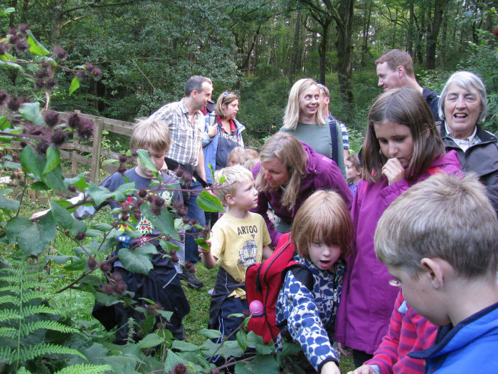 Eco club looking and touching the Burdock