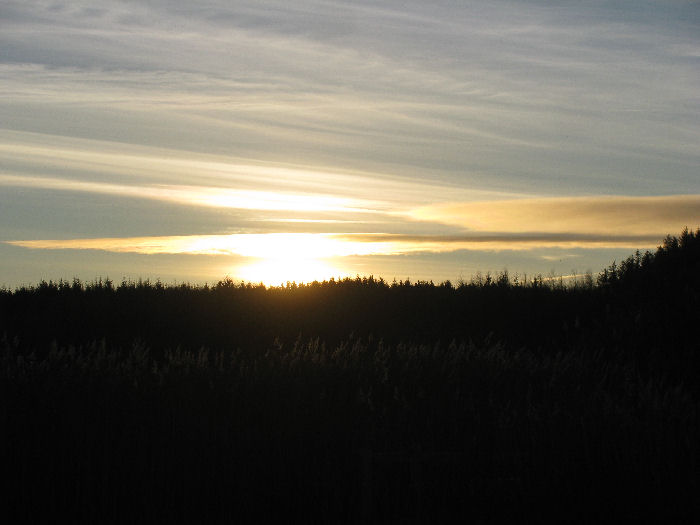 Sun rising behind the reed bed