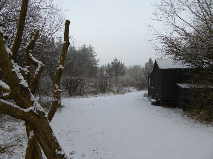 Snow at Foxglove in January