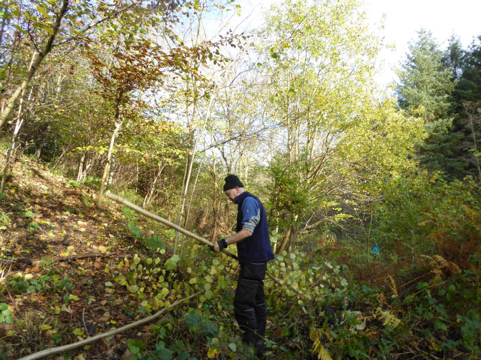 Coppicing on the bankside