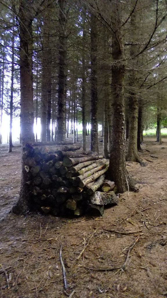 Log pile in plantation