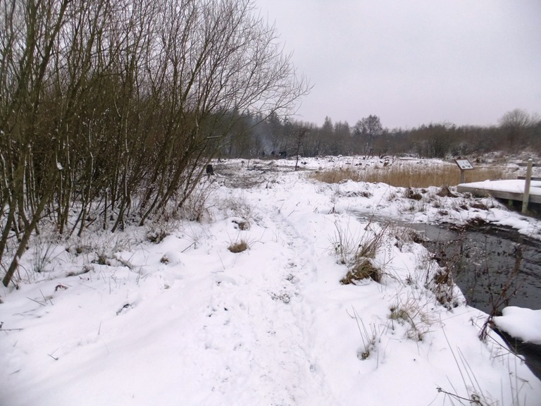 Coppiced area in snow