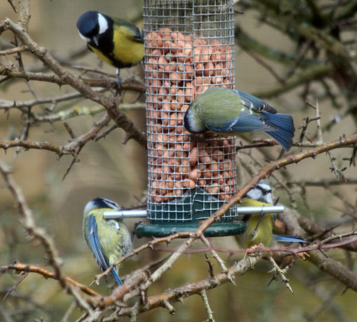 Birds on the feeder