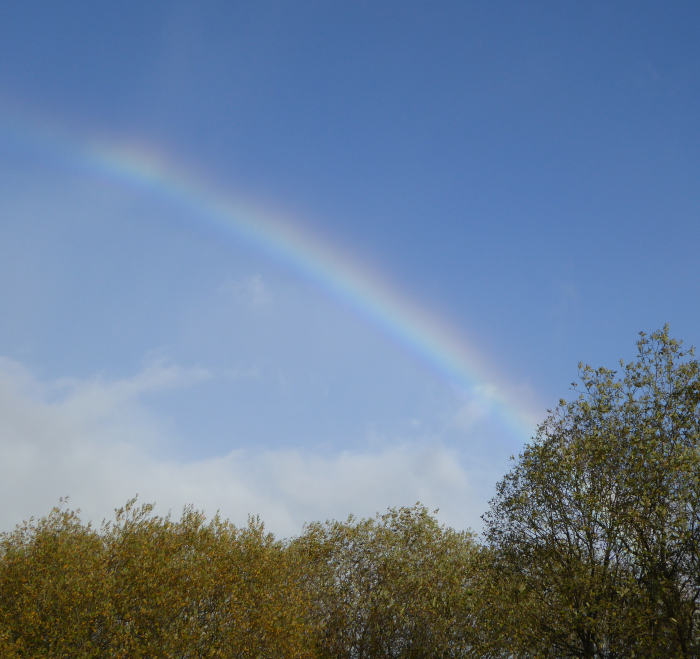 Rainbow over Foxglove