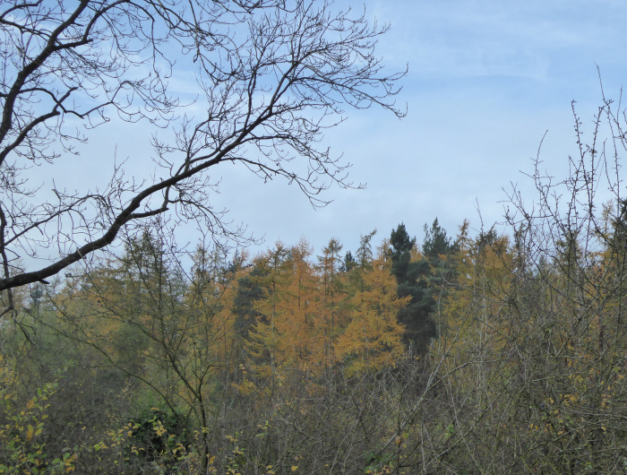 Blue sky and autumn colours