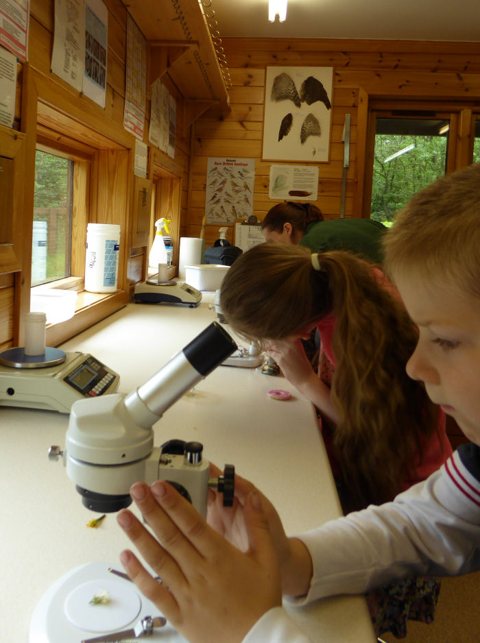 Using the microscopes