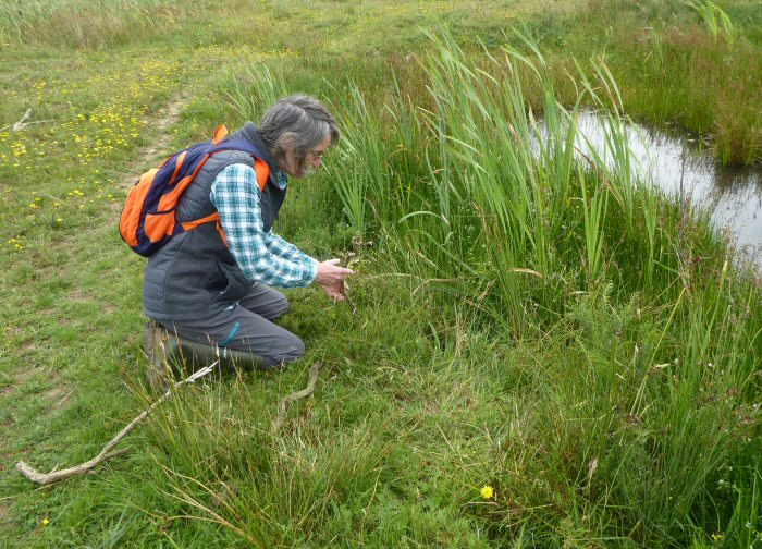 Marking the Pillwort