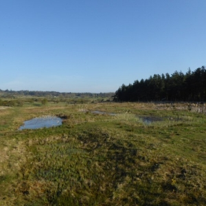 The wetland ponds