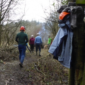 Coppicing in the Hazel Avenue